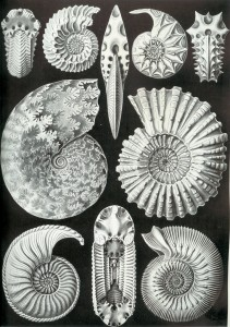 Ammonite types